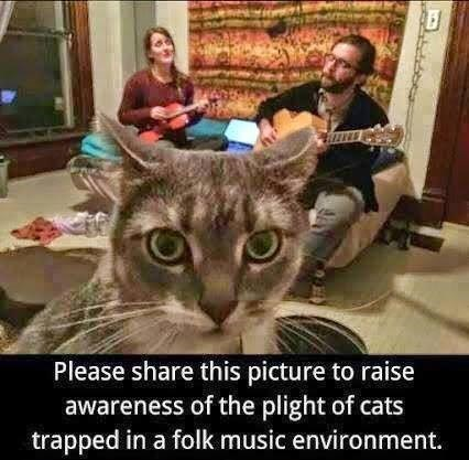 cat memes - 9374331392
