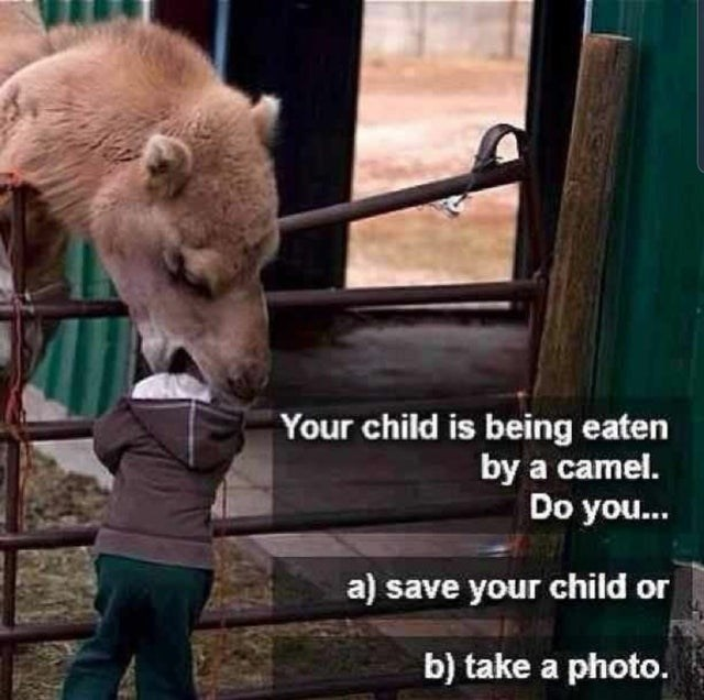 Mammal - Your child is being eaten by a camel. Do you... a) save your child or b) take a photo.