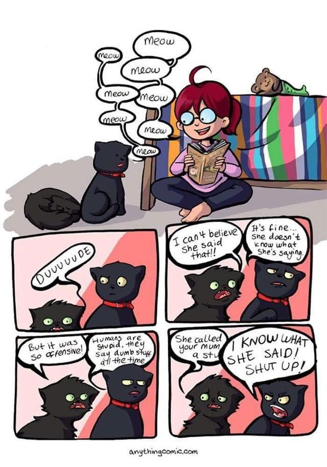 Cartoon - meow meow meow meow meow meow meow meaw H's fine... She doesn't know what She's saying I cant believe She said that! DUUUUUDE But it was So afensive! Humans are Stupid, they Say dumb stu althe time She called your MUMKNOW WHAT a stu SHE SAIDI SHUT UP! anythingcomic.com