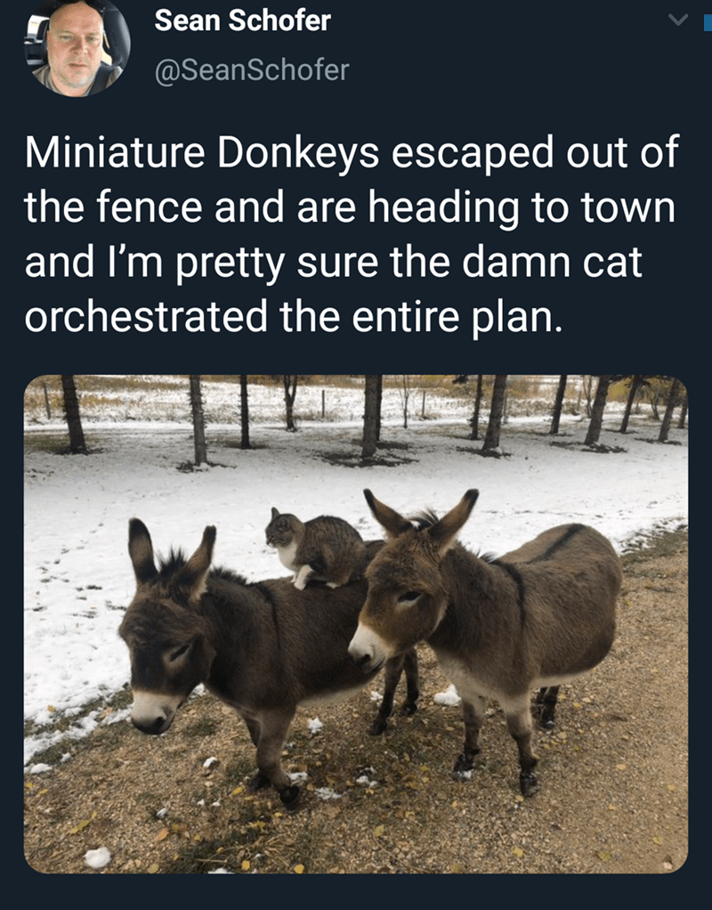 Vertebrate - Sean Schofer @SeanSchofer Miniature Donkeys escaped out of the fence and are heading to town and I'm pretty sure the damn cat orchestrated the entire plan.