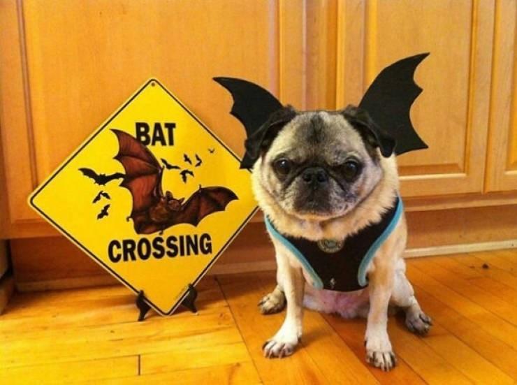 Dog - BAT CROSSING
