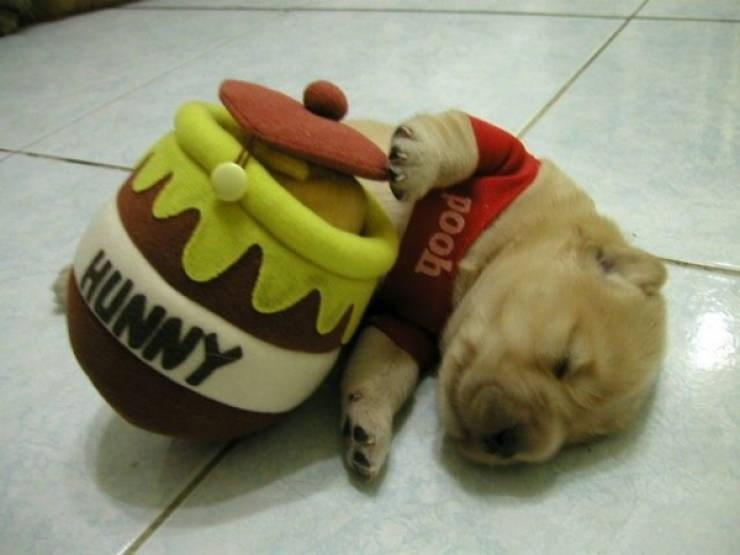 Dog - HUNNY рooh