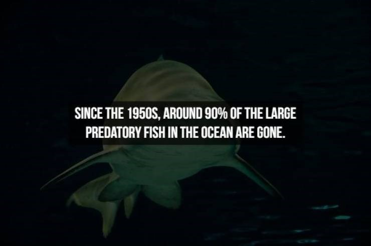 Green - SINCE THE 1950S, AROUND 90% OF THE LARGE PREDATORY FISH IN THE OCEAN ARE GONE