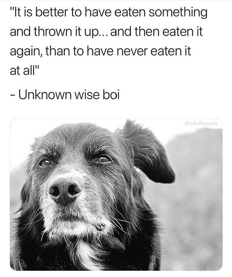 "Dog breed - ""It is better to have eaten something and thrown it up... and then eaten it again, than to have never eaten it at all"" - Unknown wise boi @heckoffsupreme"