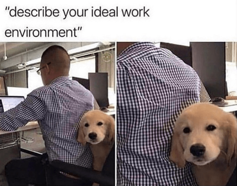"Dog - ""describe your ideal work environment"""