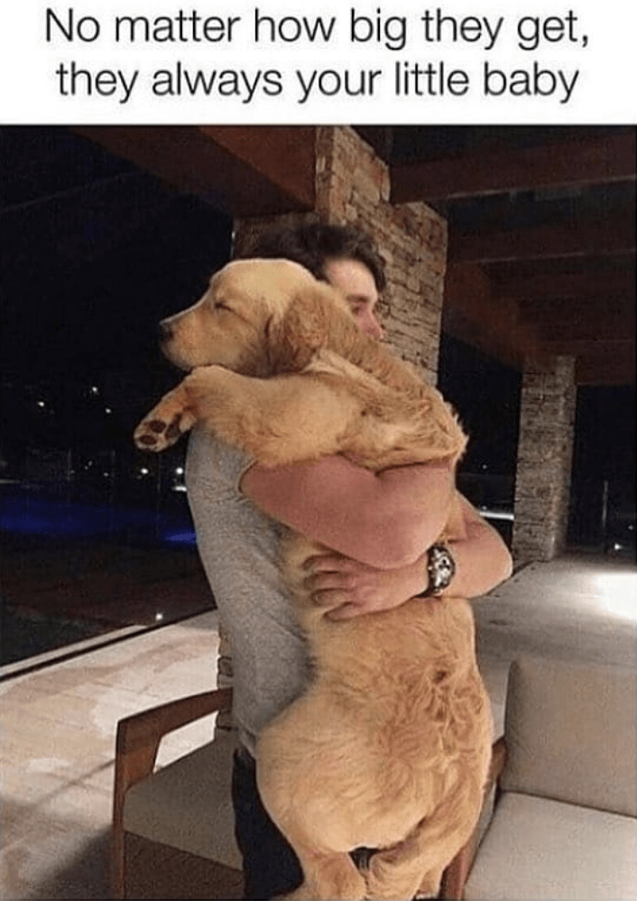Dog - No matter how big they get, they always your little baby