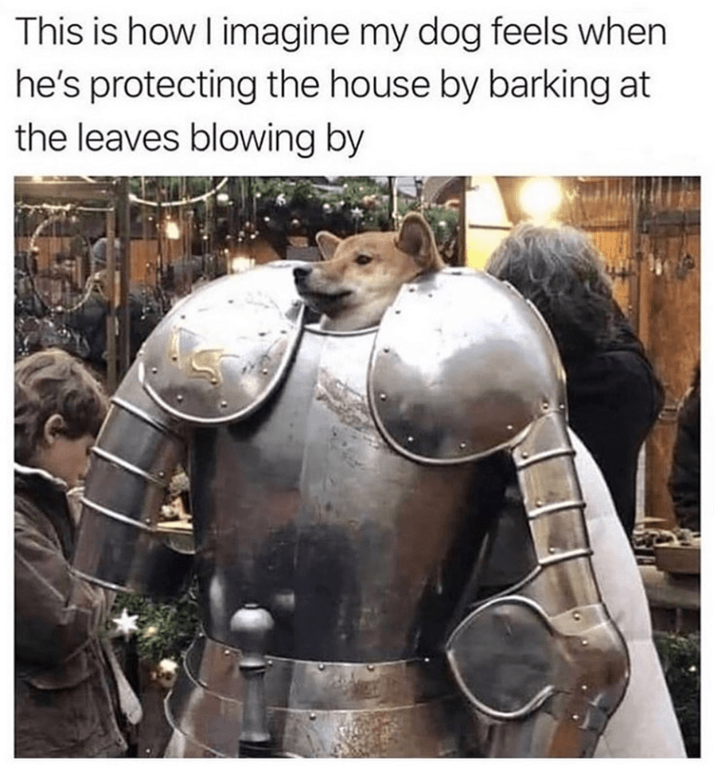 Armour - This is how I imagine my dog feels when he's protecting the house by barking at the leaves blowing by