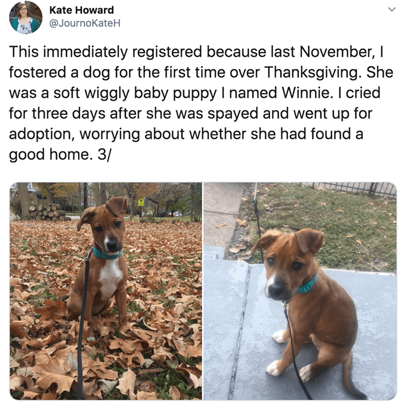 Dog - Kate Howard @JournoKateH This immediately registered because last November, I fostered a dog for the first time over Thanksgiving. She was a soft wiggly baby puppy I named Winnie. I cried for three days after she was spayed and went up for adoption, worrying about whether she had found a good home. 3/
