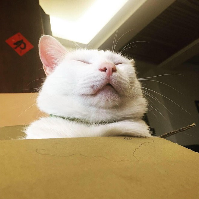 Cat - P