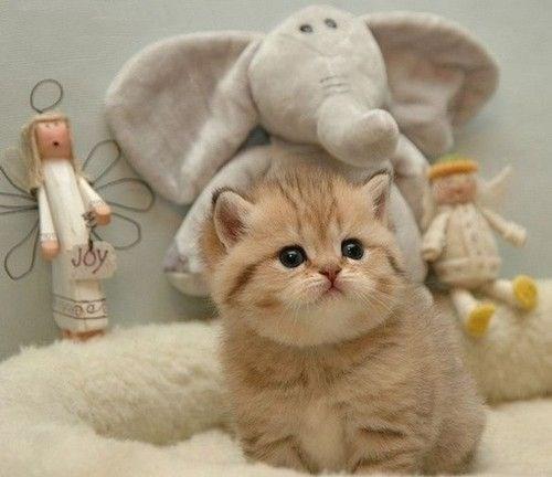 Cat - Joy