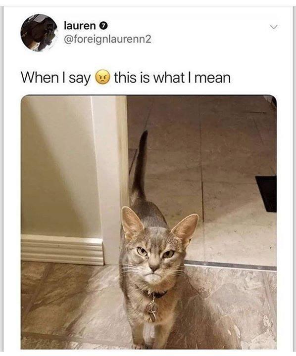 cat memes - 9374828800