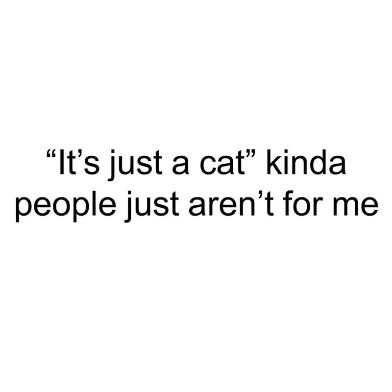 cat memes - 9374830336