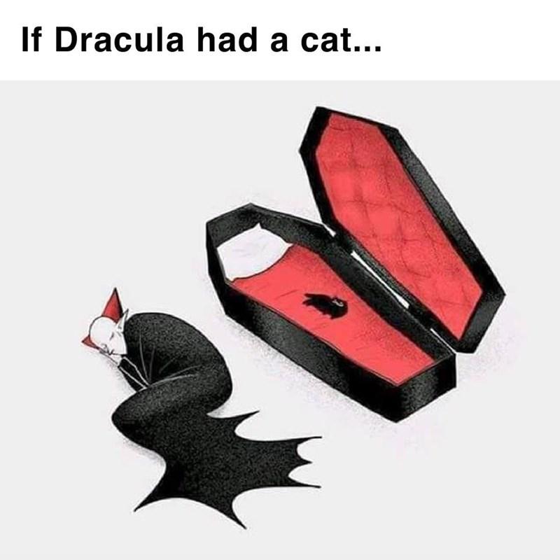 cat memes - 9374831104