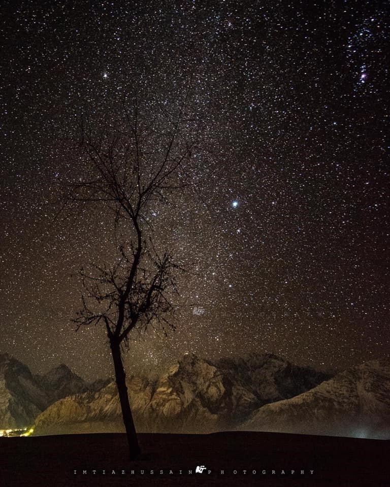tree silhouette against snowy himalaya mountains and starry night sky india