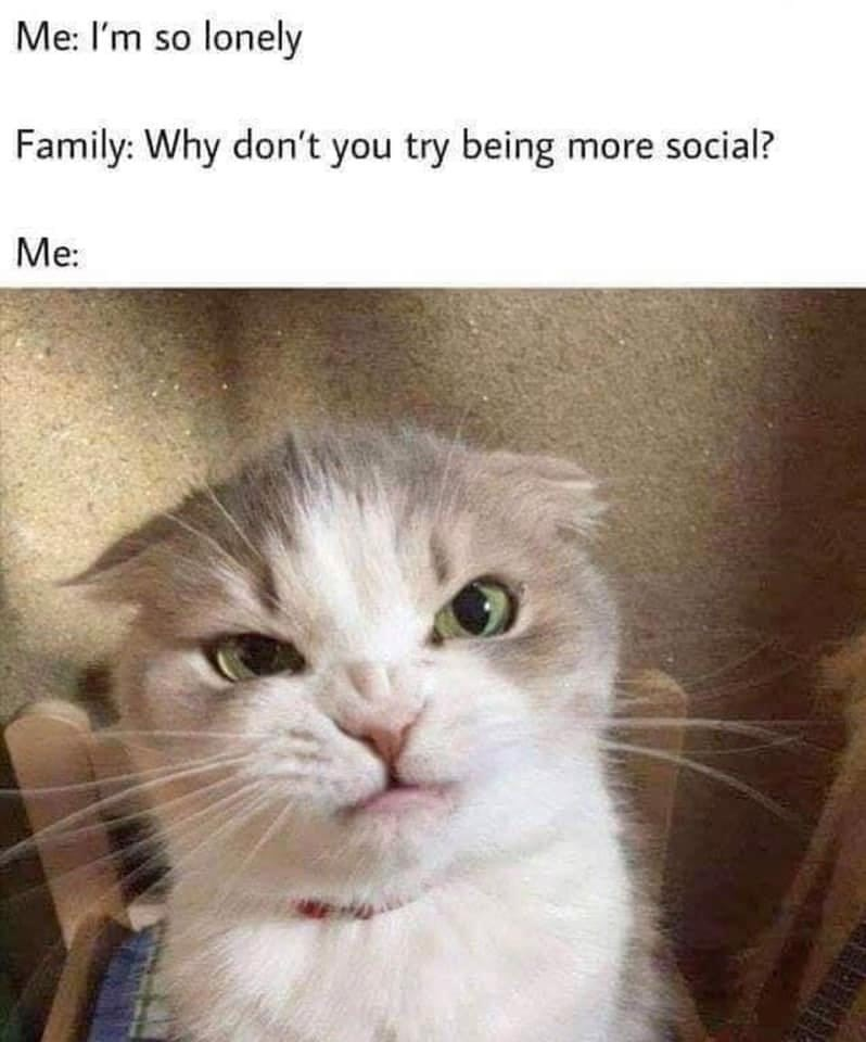Cat - Me: I'm so lonely Family: Why don't you try being more social? Me: