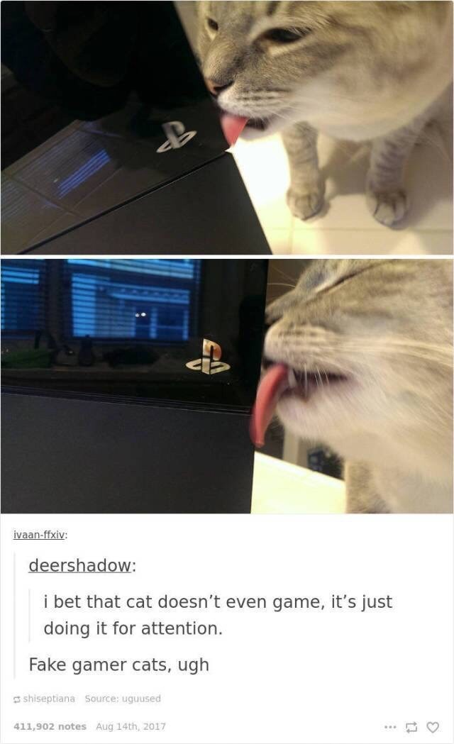 Cat - ivaan-ffxiv: deershadow: i bet that cat doesn't even game, it's just doing it for attention. Fake gamer cats, ugh shiseptiana Source: uguused 411,902 notes Aug 14th, 2017