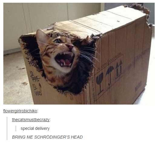 Box - om corsosic 4910 10 950 flowergirlrobichiko: thecatsmustbecrazy: special delivery BRING ME SCHRODINGER'S HEAD