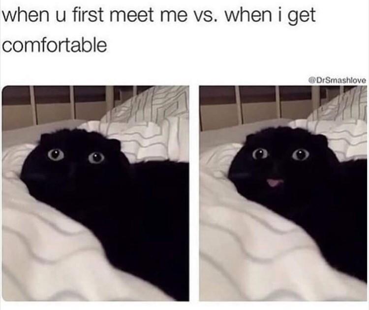 Black cat - when u first meet me vs. when i get comfortable DrSmashlove