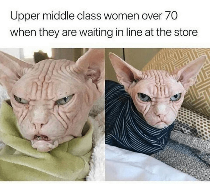 Cat - Upper middle class women over 70 when they are waiting in line at the store