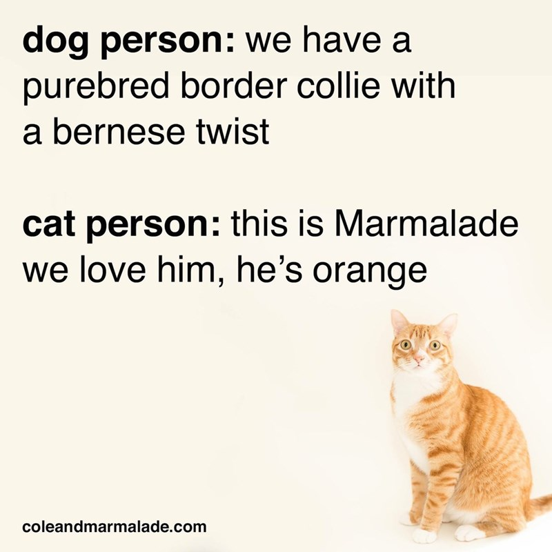 Text - dog person: we have a purebred border collie with a bernese twist cat person: this is Marmalade we love him, he's orange coleandmarmalade.com