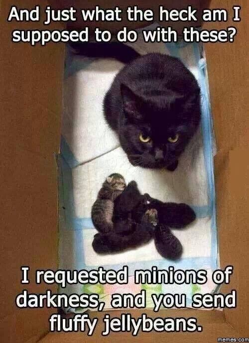 Cat - And just what the heck am I supposed to do with these? I requested minions of darkness, and you send fluffy jellybeans. memes.com