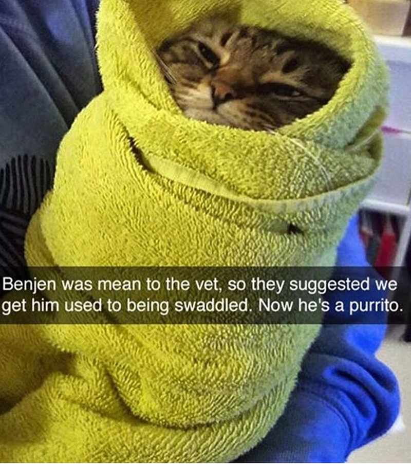 Cat - Benjen was mean to the vet, so they suggested we get him used to being swaddled. Now he's a purrito.