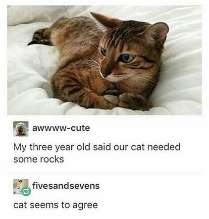 Cat - awwww-cute My three year old said our cat needed some rocks fivesandsevens cat seems to agree