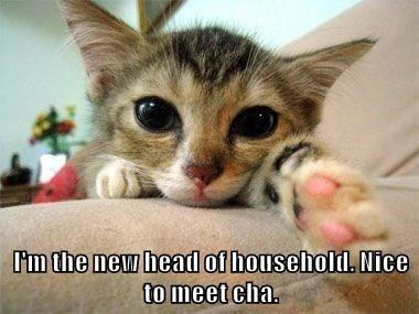 Cat - l'm the new head of household. Nice to meet cha.