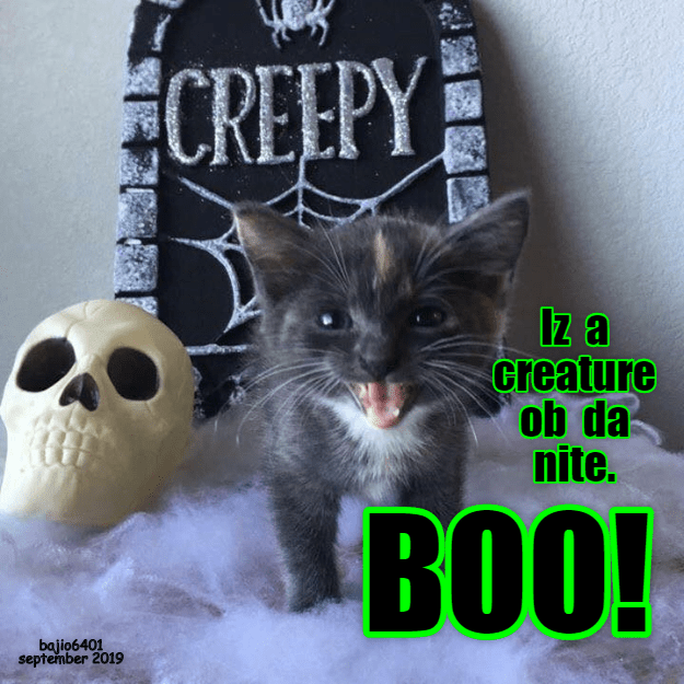 Whiskers - CREEPY Iz a creature ob da nite. BOO! bajio6401 september 2019