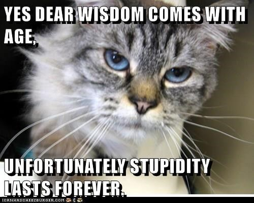 Cat - YES DEAR WISDOM COMES WITH AGE UNFORTUNATELYSTUPIDITY LASTS FOREVER ICANHASCHEE2EURGER cOM