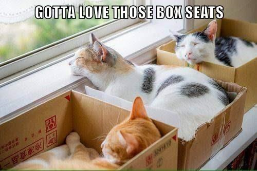Cat - GOTTA LOVE THOSE BOX SEATS Jug 冷凍食品一