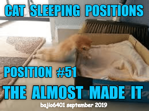 Photo caption - CAT SLEEPING POSITIONS POSITION#51 THE ALMOST MADE IT bajio6401 september 2019