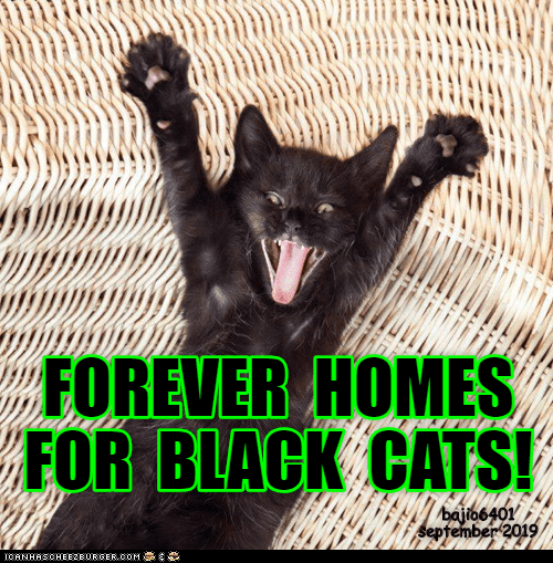 Facial expression - FOREVER HOMES FOR BLACK CATS! baito6401 september 2019 CANHASCHEE2EURGER cOM