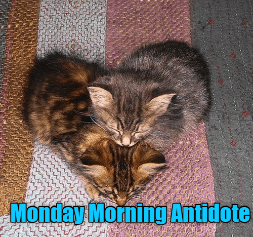 Cat - Monday MorningAntidote