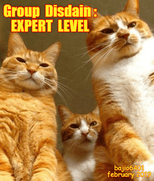 Cat - Group Disdain: EXPERT LEVEL bajio6401 february 2019