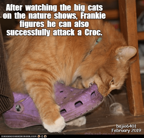 Photo caption - After watching the big cats on the nature shows, Frankie figures he can also successfully attack a Croc. bajio6401 February 2019 ICANHASCHEE2EURGER cOM