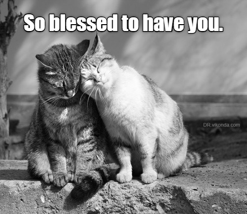 Cat - So blessed to have you. DR vikonda.com