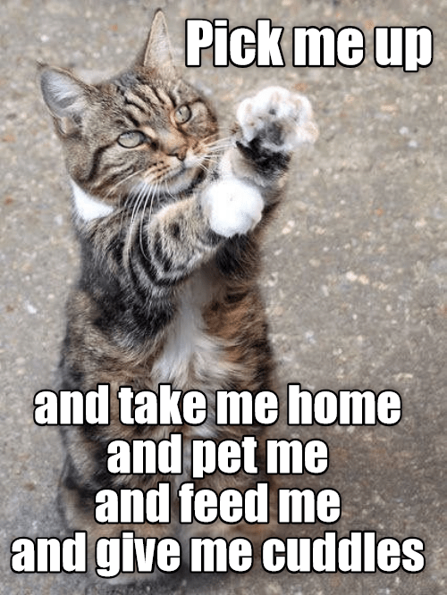 Cat - Pick me up and take me home and pet me and feed me and give me cuddles