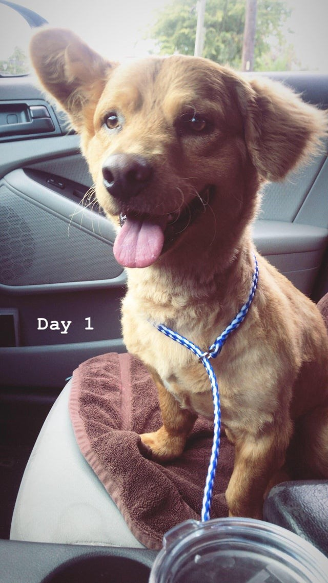 Dog - Day 1