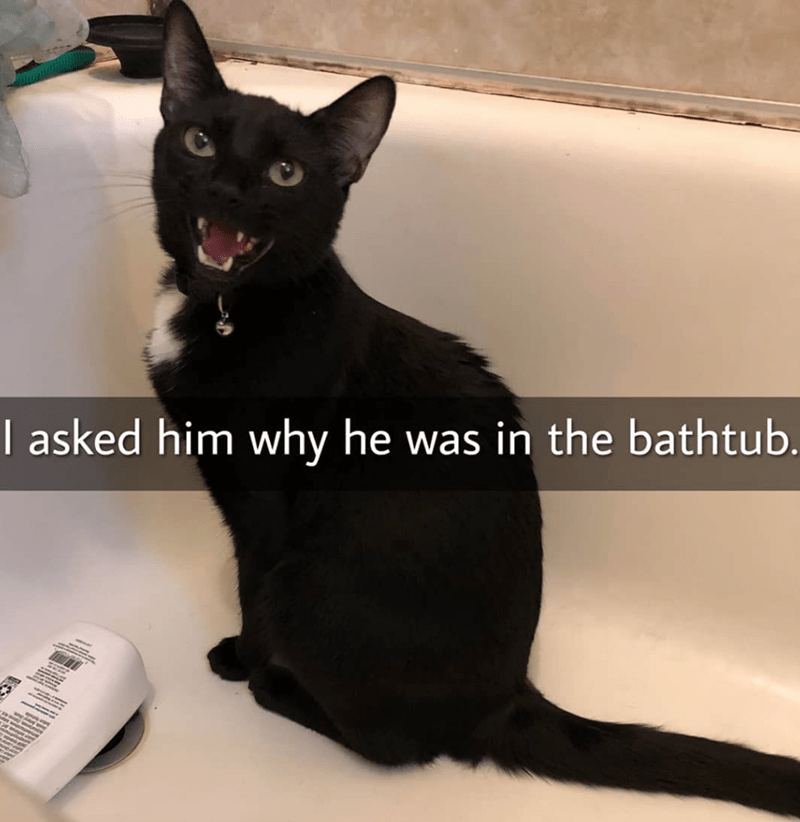 Cat - I asked him why he was in the bathtub.