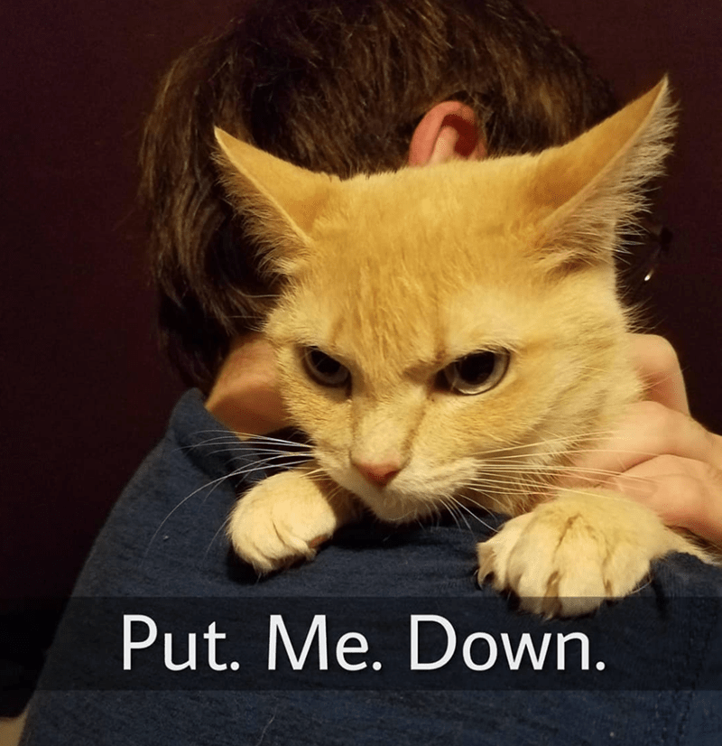 Cat - Put. Me. Down.