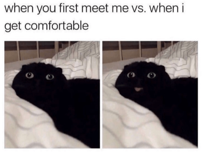 Cat - when you first meet me vs. when i get comfortable