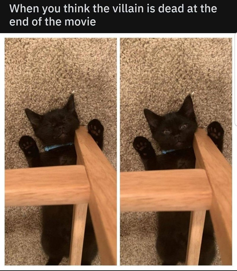 Cat - When end of the movie think the villain is dead at the you