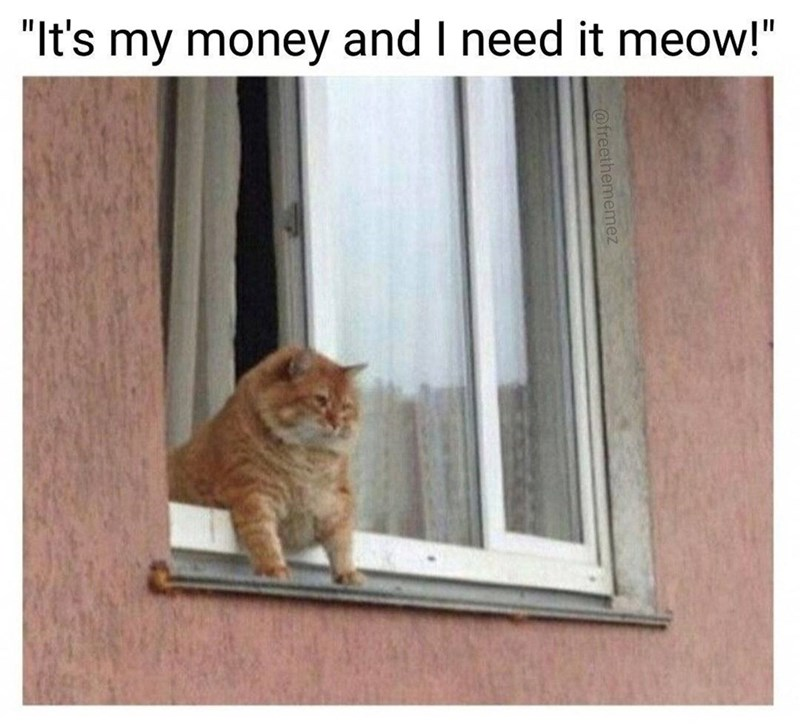 "Cat - ""It's my money and I need it meow!"" @freethememez"