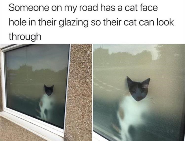 Cat - Someone on my road has a cat face hole in their glazing so their cat can look through