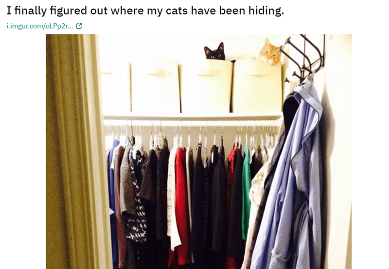 Clothes hanger - I finally figured out where my cats have been hiding. i.imgur.com/oLPp2r...