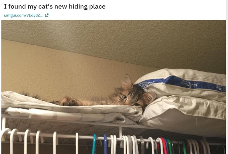 Cat - I found my cat's new hiding place i.imgur.com/VEdydZ... Hertyr st Rexad Kond