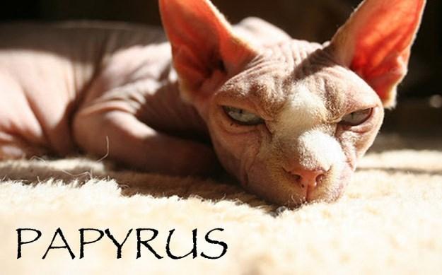 Cat - PAPYRUS