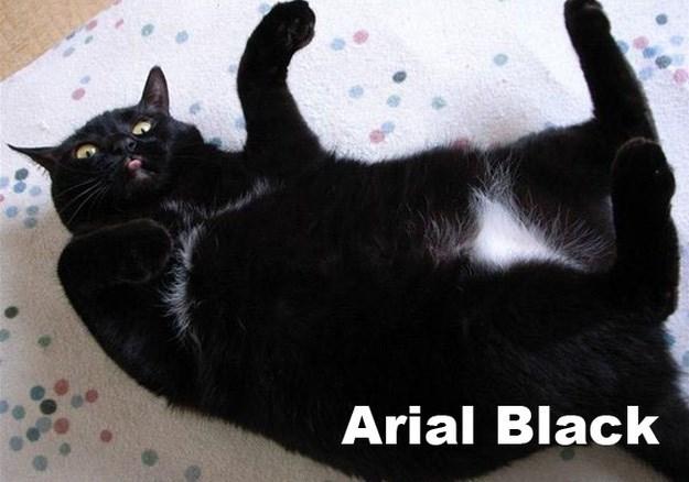 Cat - Arial Black