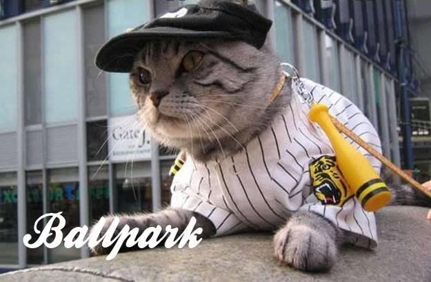 Cat - Gase j. Ballrark
